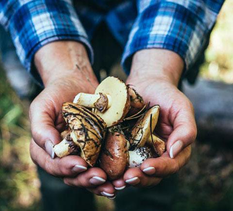fregola-con-funghi-e-salsiccia